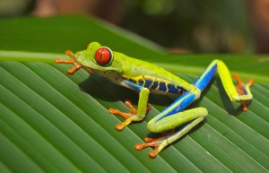 tree-frog-69813_1280 (1)